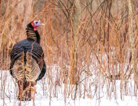 Hunting and Hearing Loss Don't Have to Go Hand-in-hand